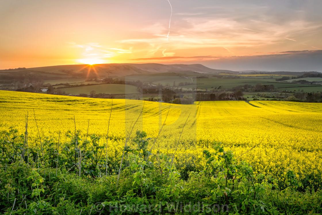 """Rapeseed Fields"" stock image"