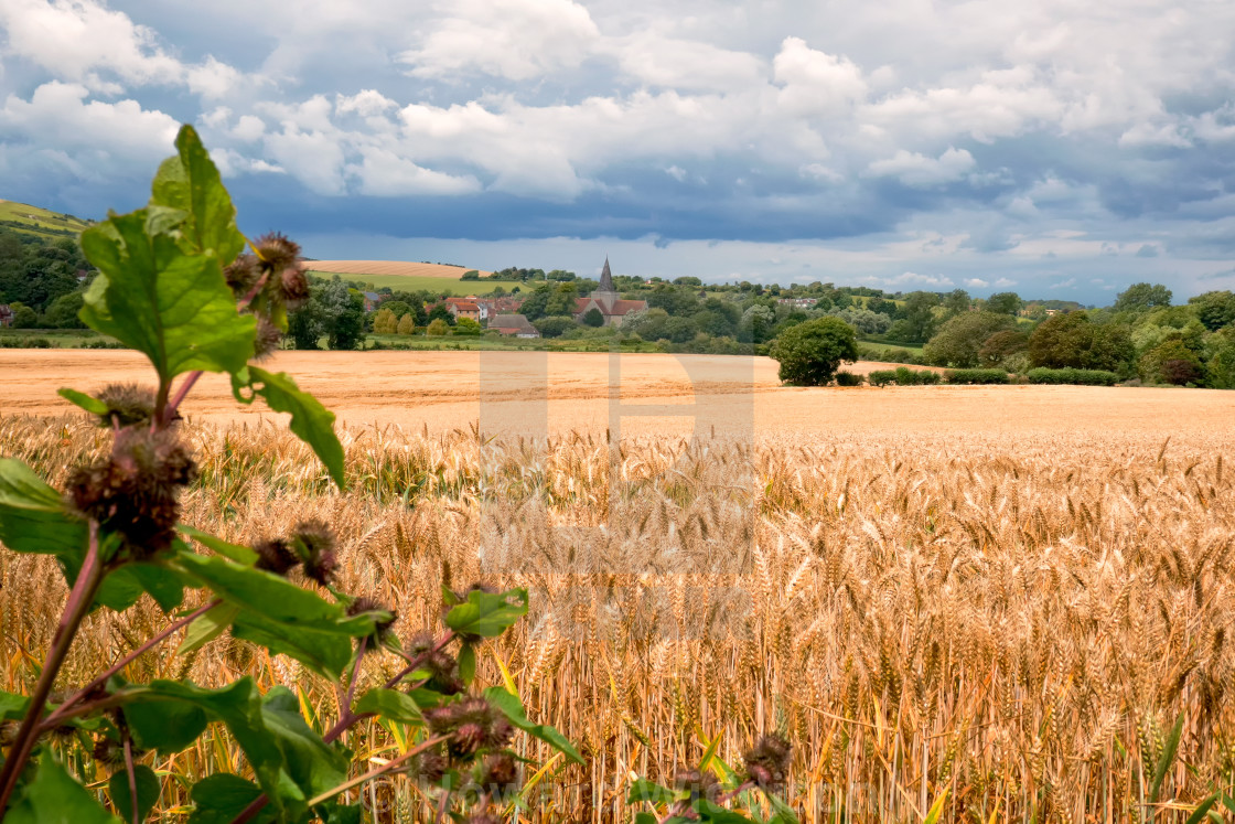 """Wheta fields at Alfriston"" stock image"
