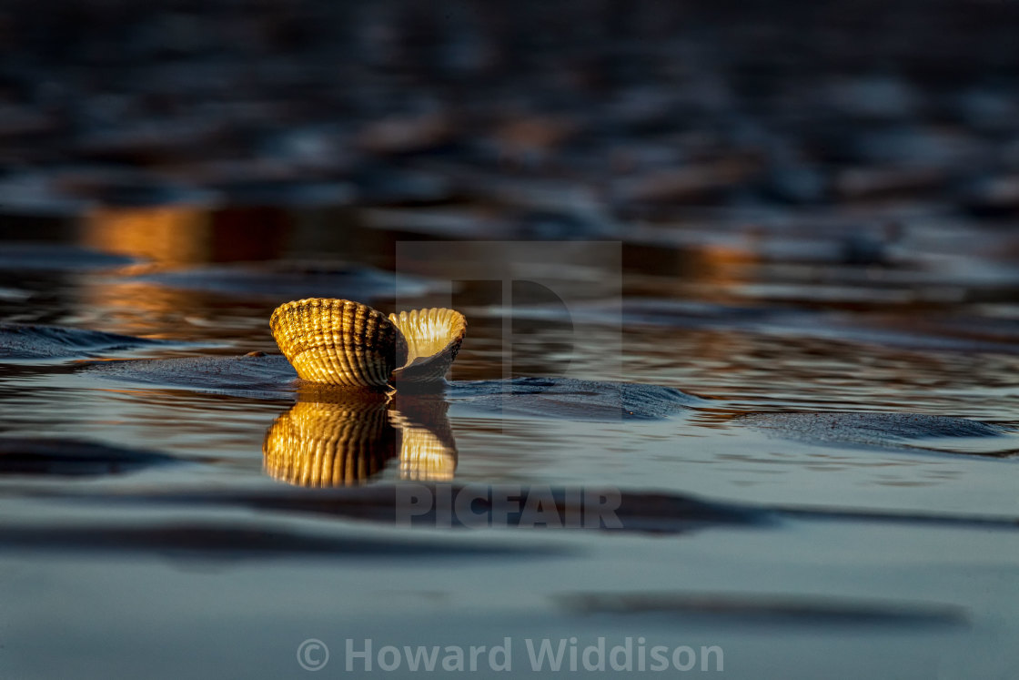 """""""Shells in the evening light"""" stock image"""