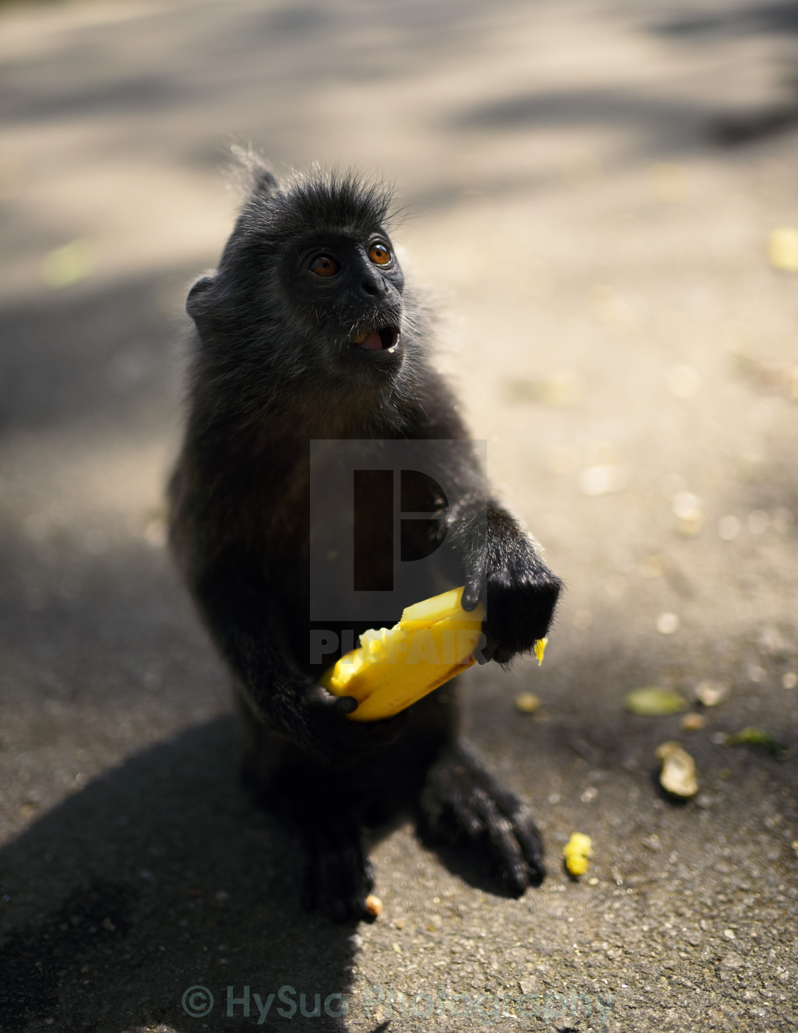 """The Shocking Monkey"" stock image"