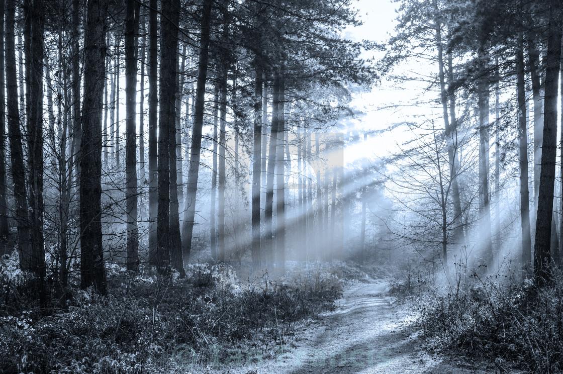 """""""Sherwood Pines"""" stock image"""