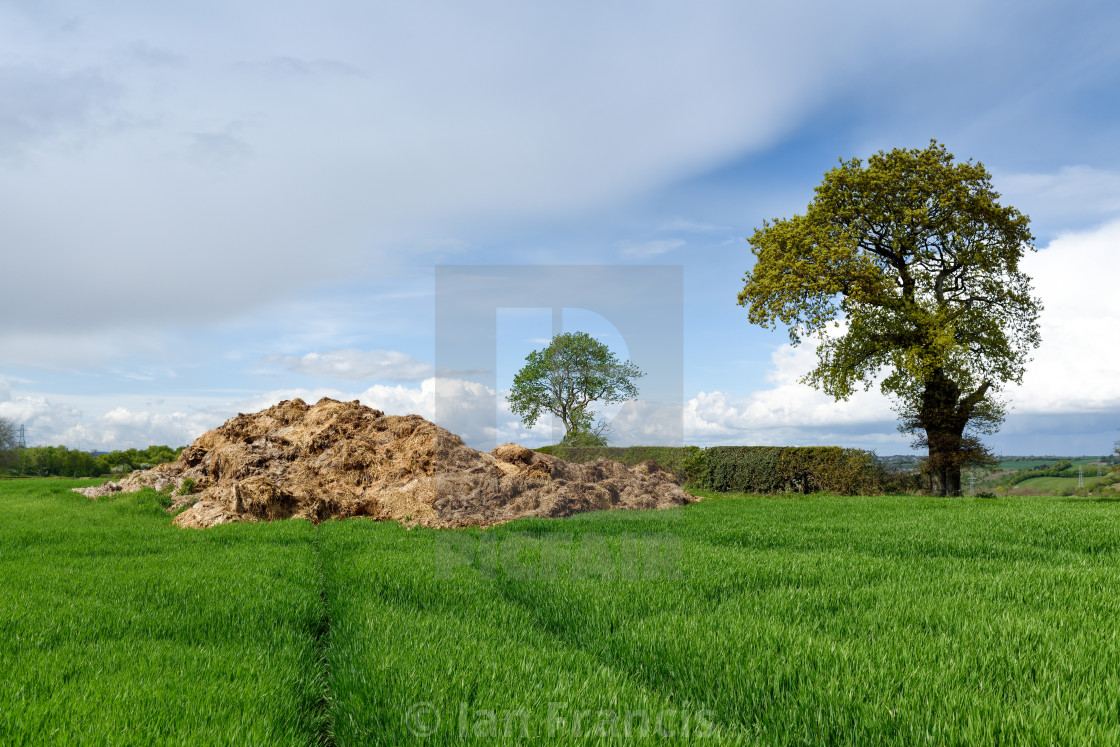 """Farming animal manure in rural fields"" stock image"
