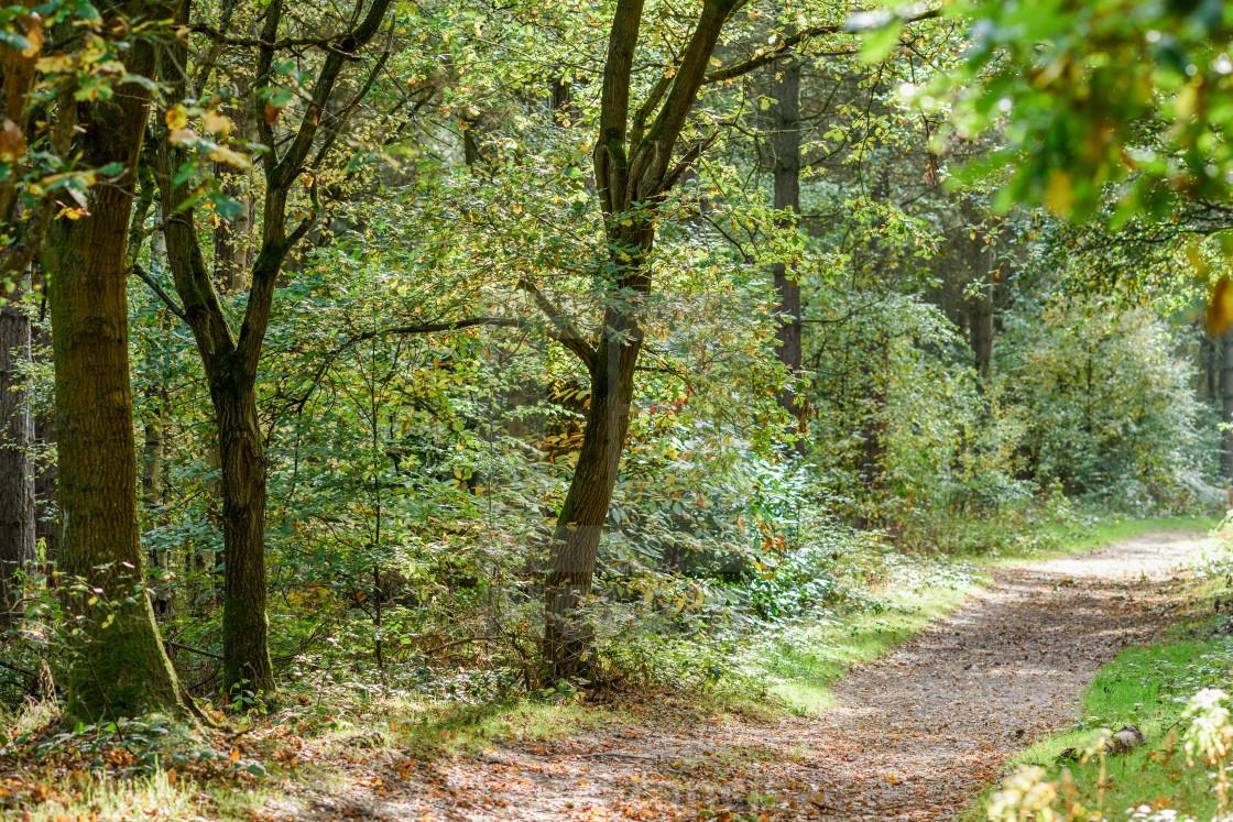 """Autumn Woodlands in Nottinghamshire."" stock image"