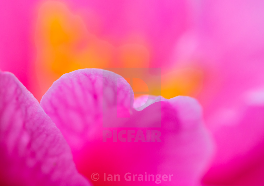 """""""Abstract Flora"""" stock image"""