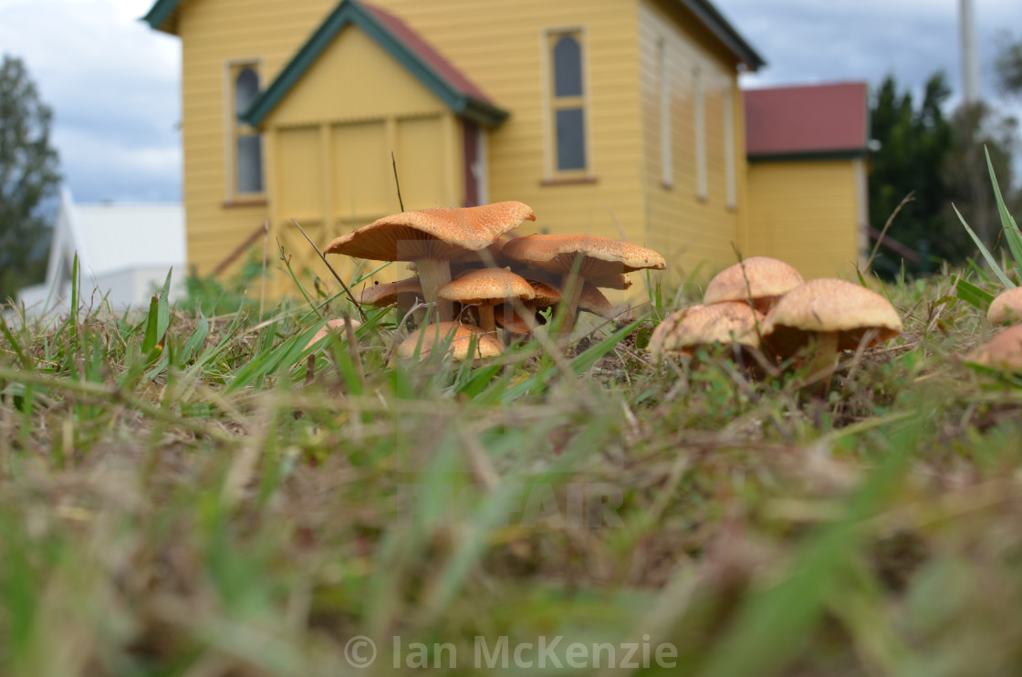 """Colourful Fungi"" stock image"