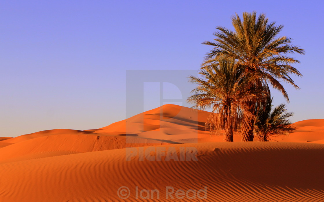 """Oasis in Morocco"" stock image"