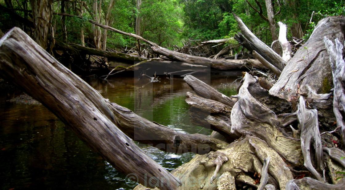"""""""Prehistoric River"""" stock image"""
