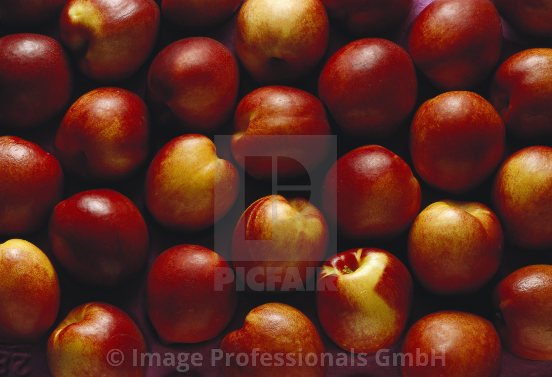 """Many Nectarines on Market Tray"" stock image"