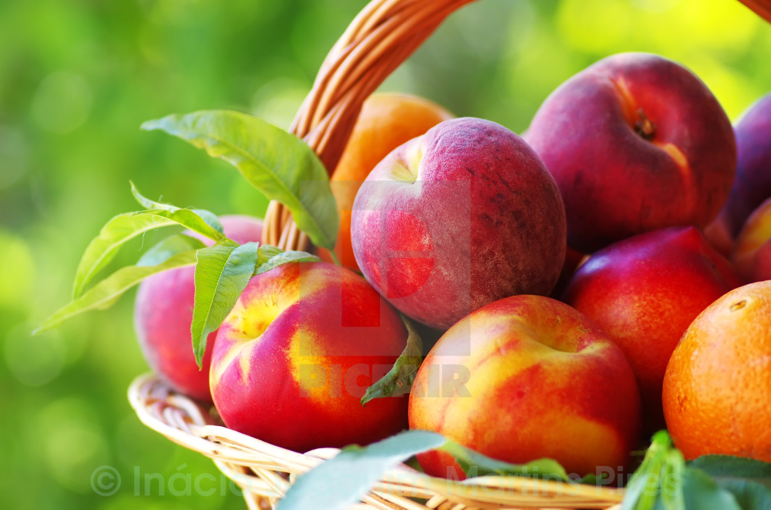 """""""peaches and nectarines in basket"""" stock image"""