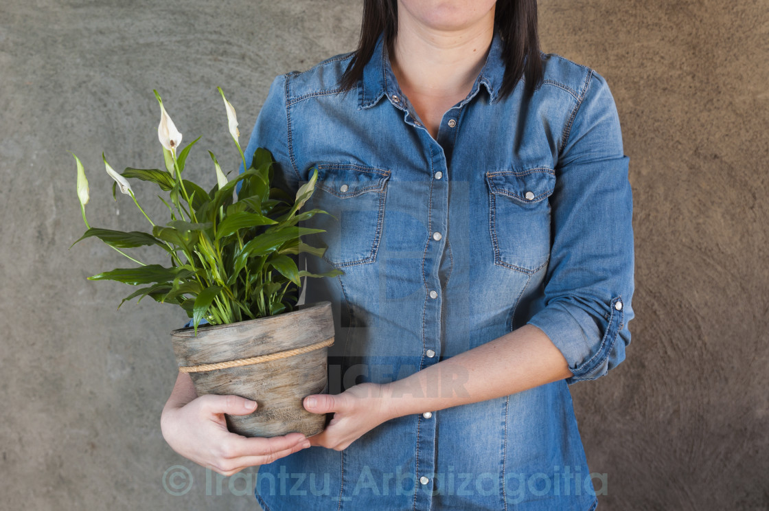 """Woman holding a white calla plant in a flower pot"" stock image"