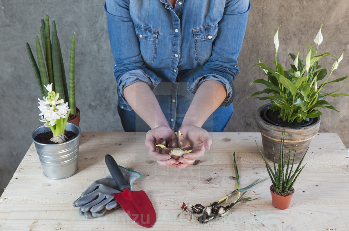 """Woman with flowers and garden tools"" stock image"