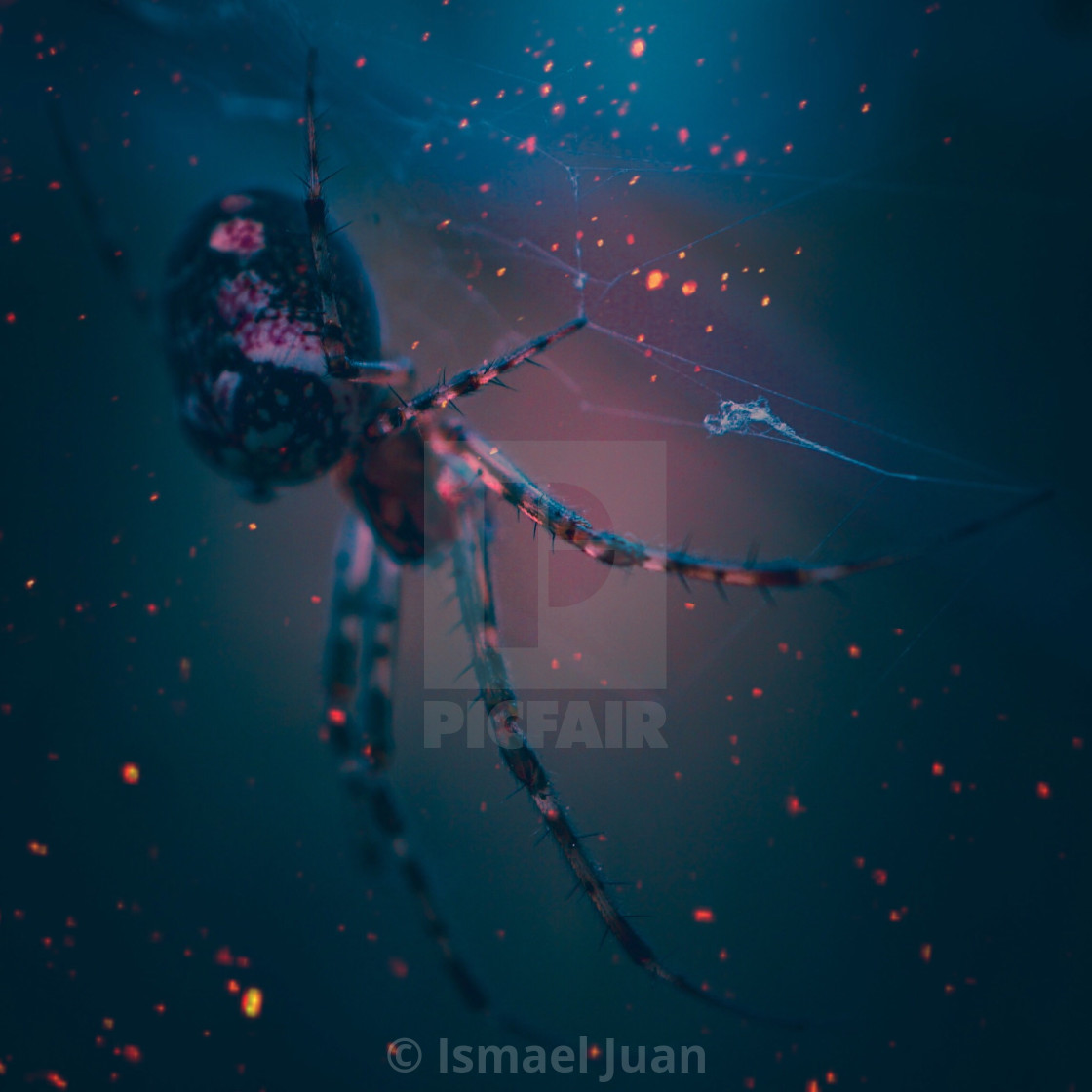 """spider on the spider web in the nature"" stock image"