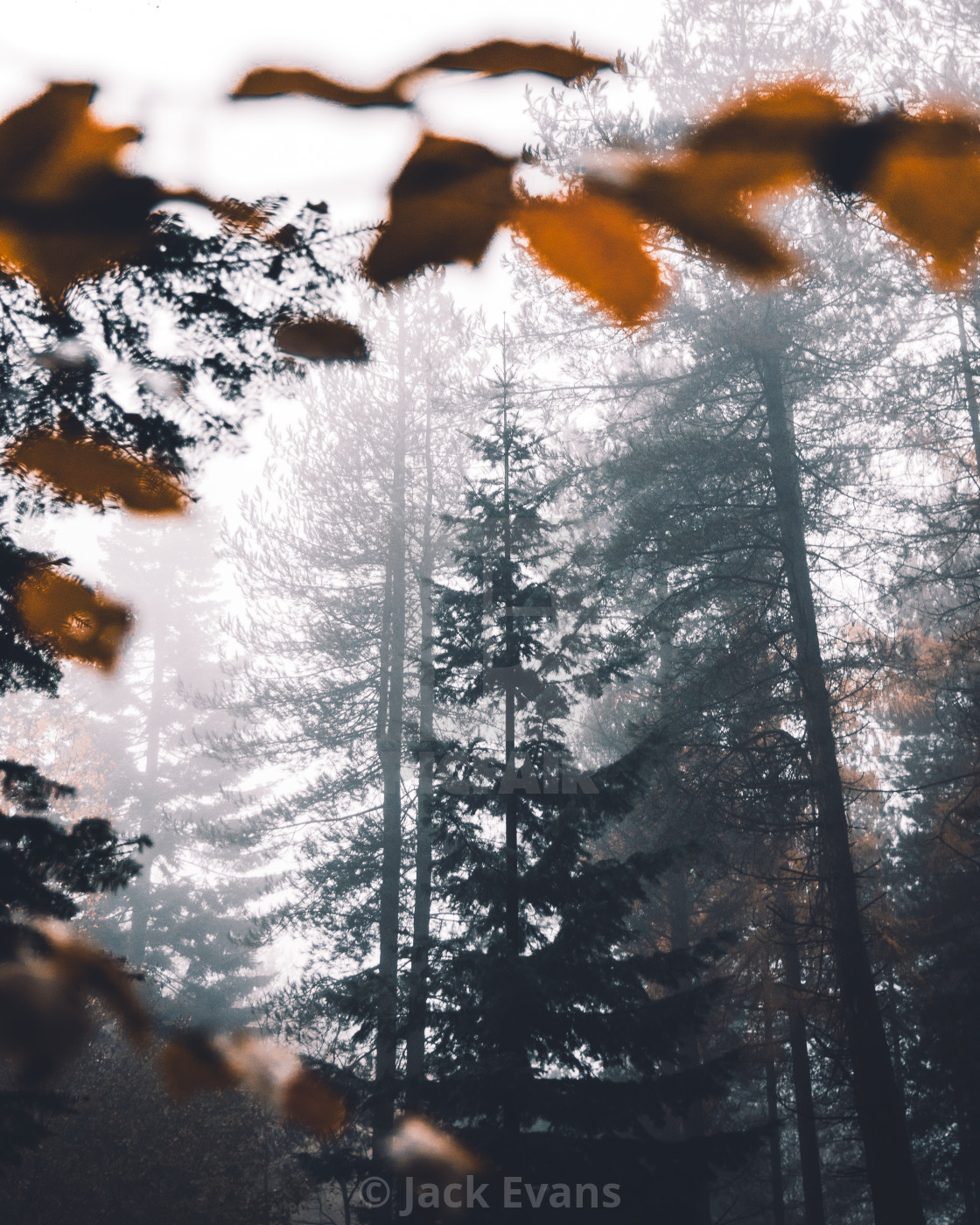 """A Frame through the Fog"" stock image"