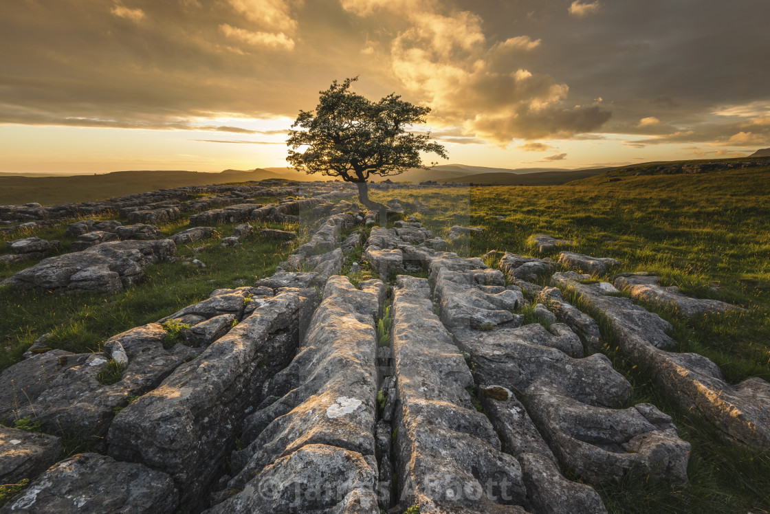 """Winskill Stones lone tree at sunset"" stock image"