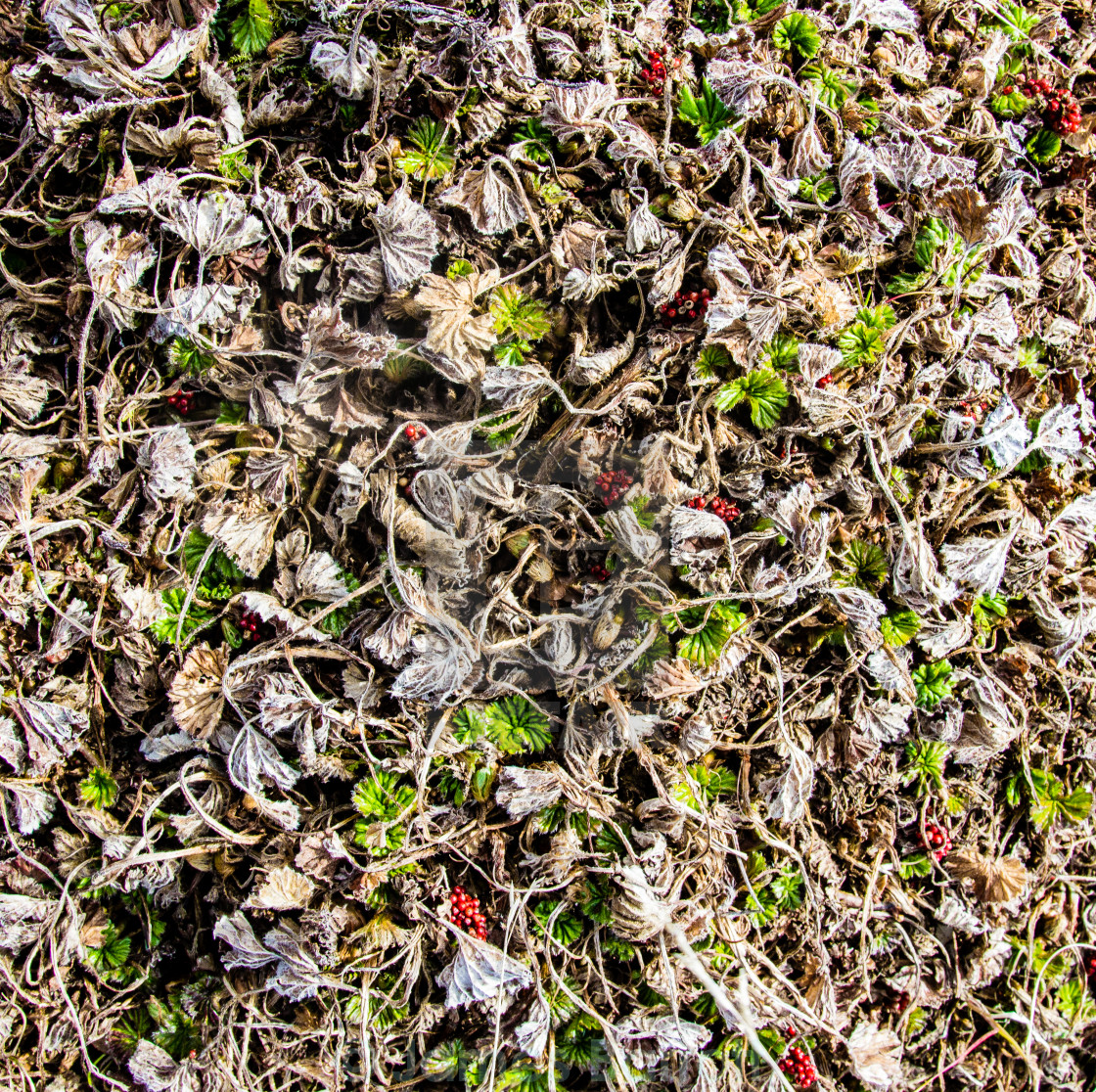 """""""A detail of the forest floor."""" stock image"""