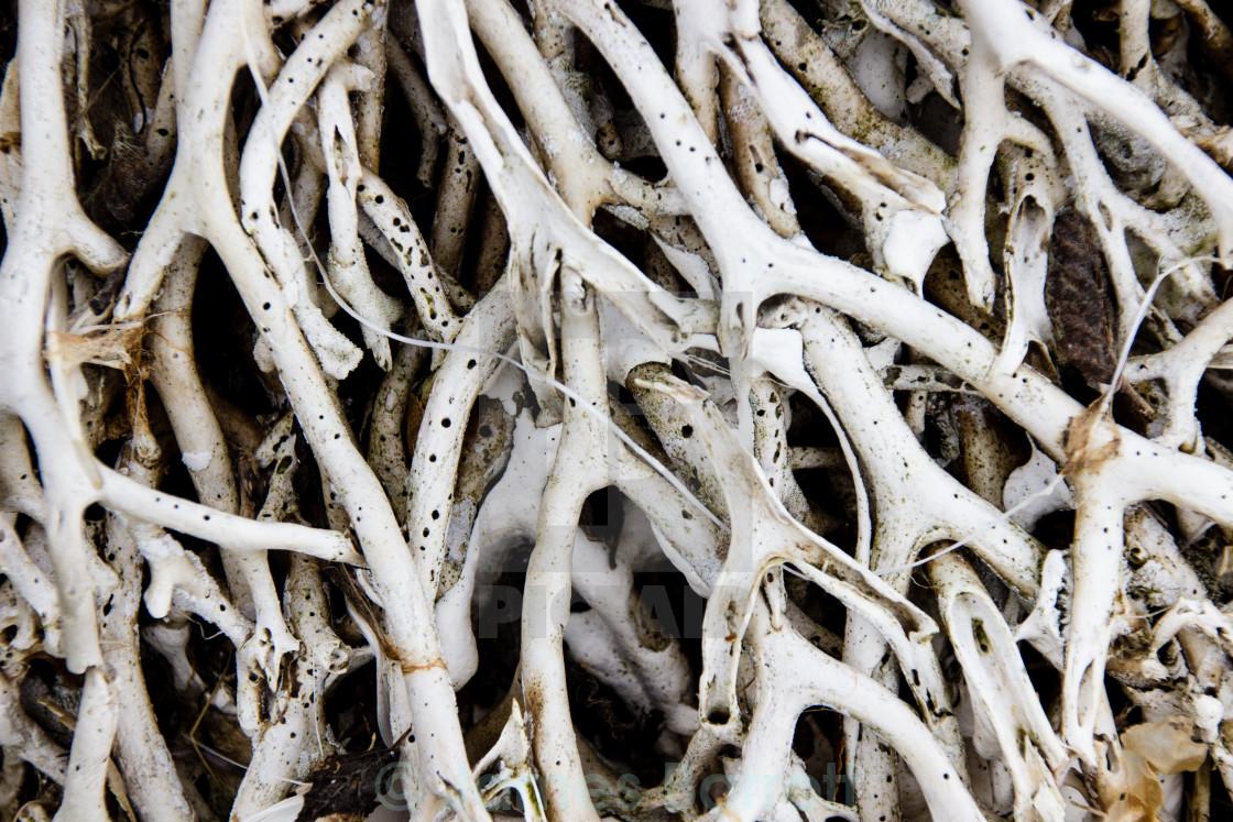 """""""Beached Seaweed"""" stock image"""