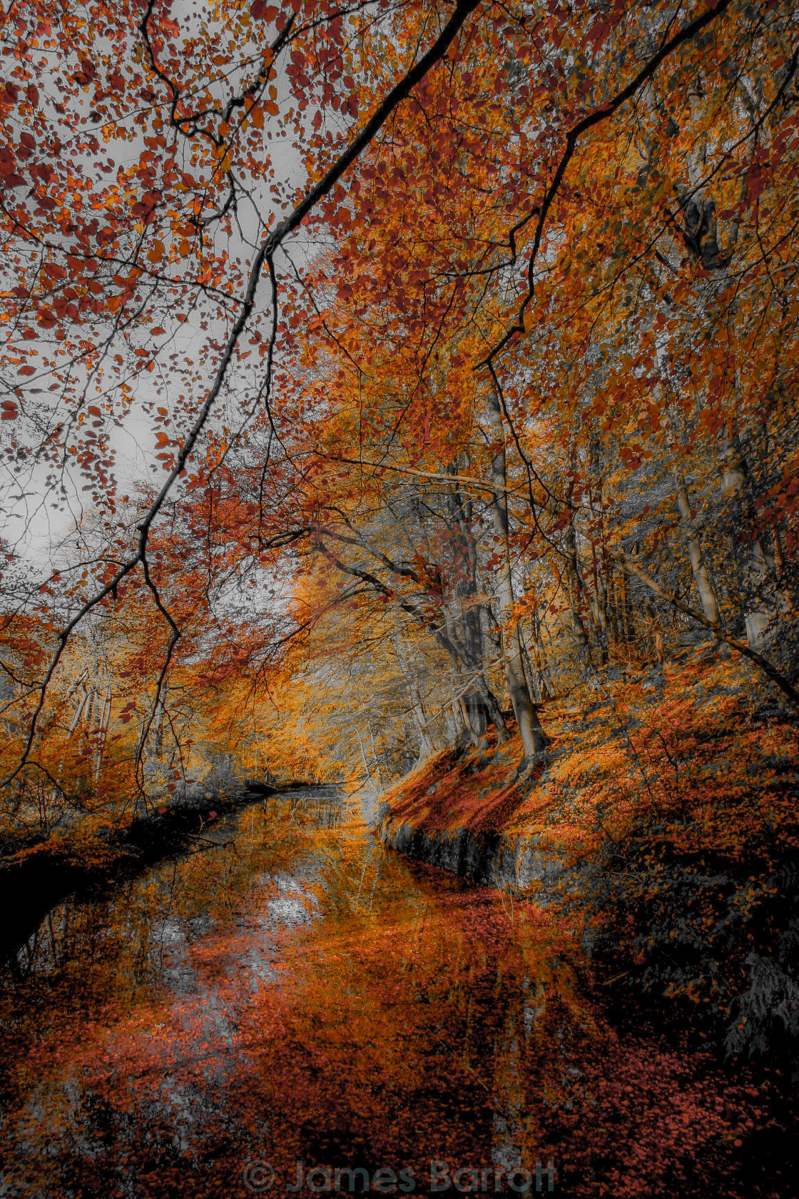 """""""Autumn in Middle Dean"""" stock image"""