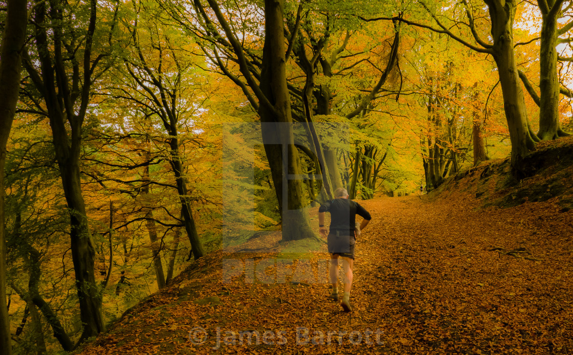 """A run in the woods"" stock image"