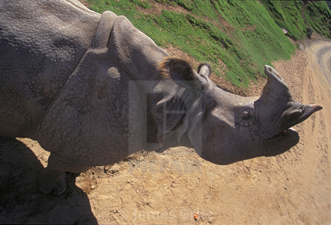 Indian Rhino - License, download or print for £33 48