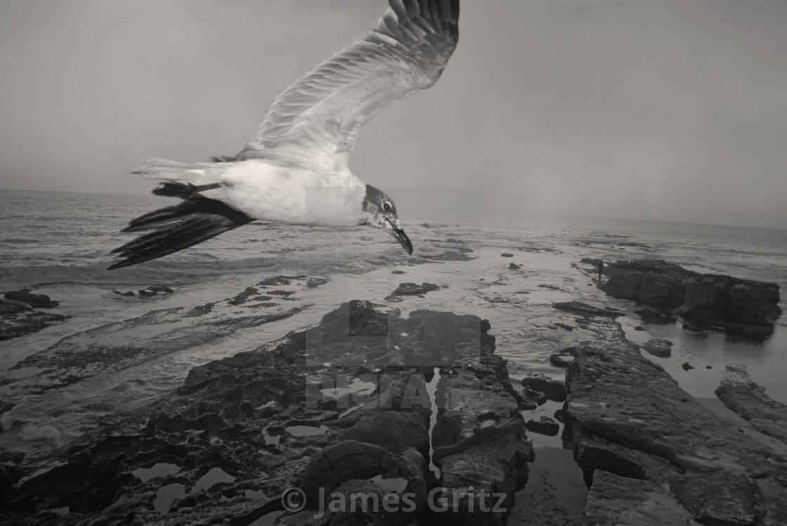 """sea gull"" stock image"