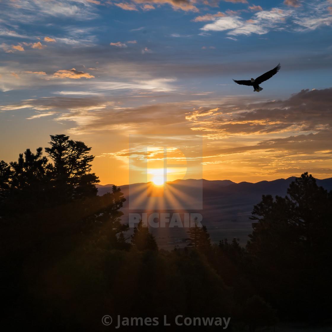 """Eagle at Sunrise"" stock image"