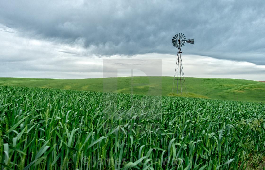 """Windmill in Field"" stock image"
