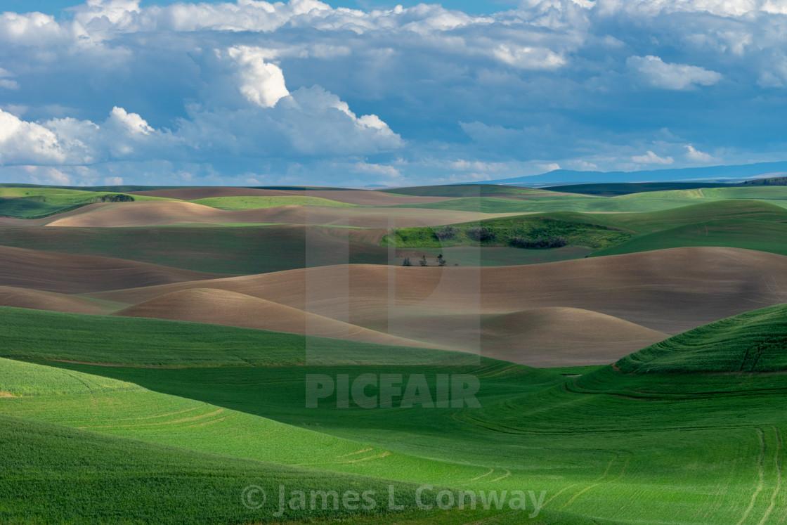 """Farmland Rolling Hills"" stock image"