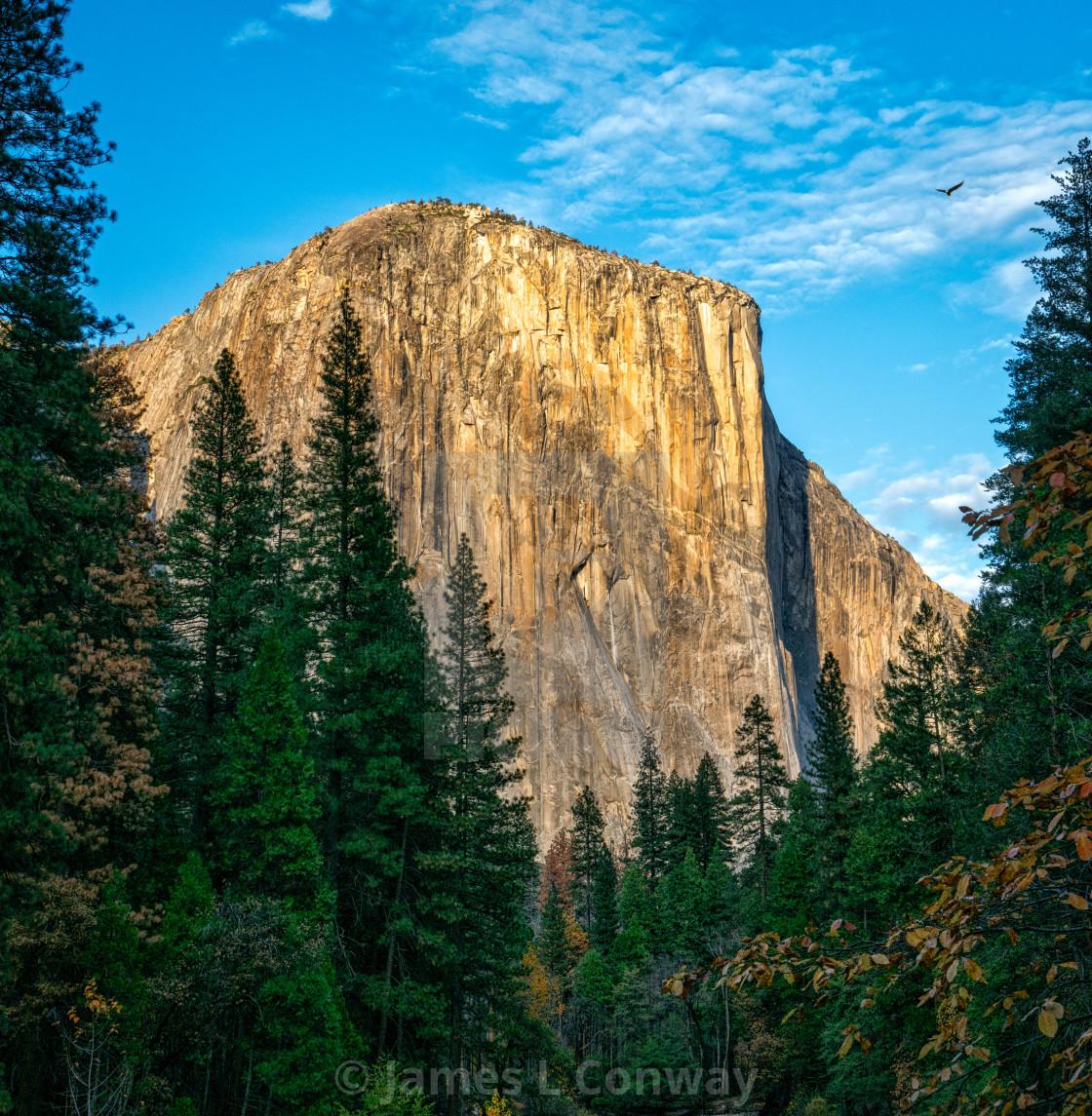 """""""El Capitan and hawk in Yosemite."""" stock image"""