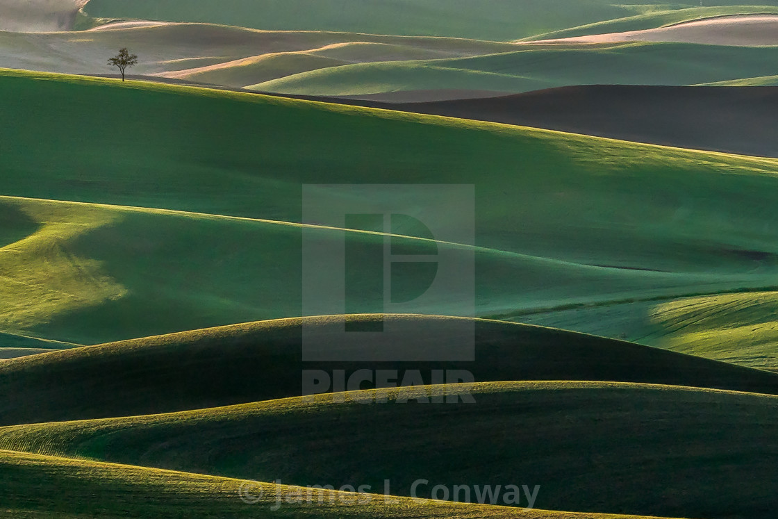 """Lone Tree in Palouse"" stock image"