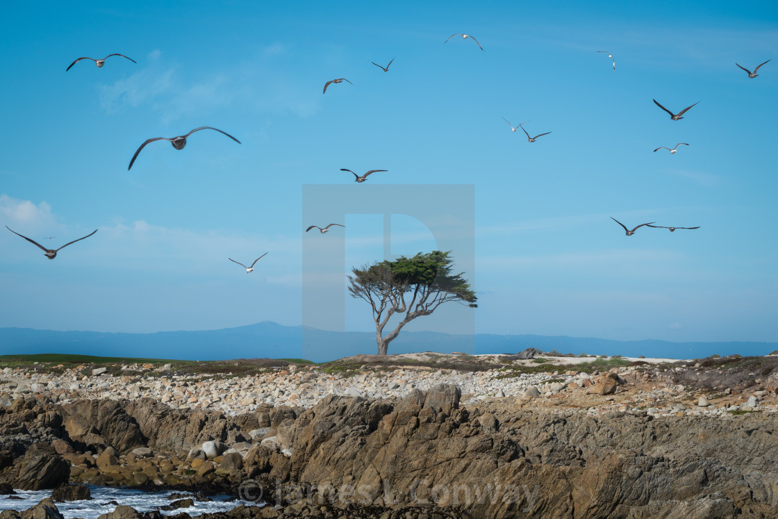 """""""Seagulls and lone tree"""" stock image"""