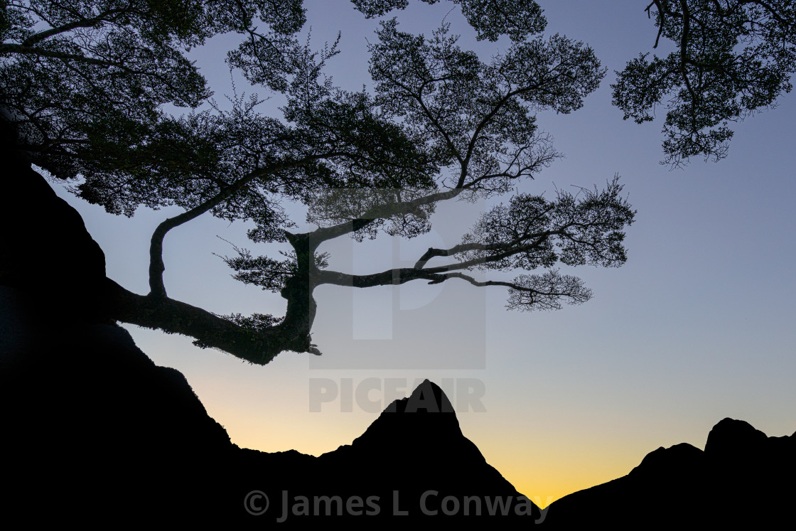 """""""Silhouette of tree and Mountain"""" stock image"""