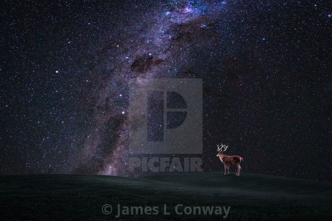 """Deer looks at Milky Way"" stock image"