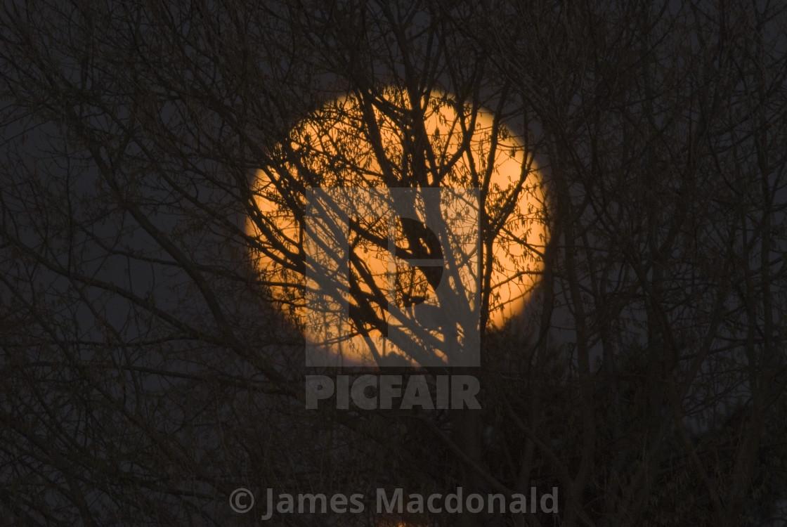 """Full moon through winter tree brances"" stock image"