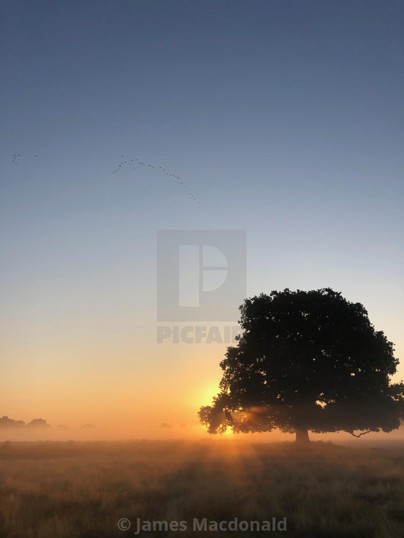 """Sunrise behind a tree in Bushy Park"" stock image"