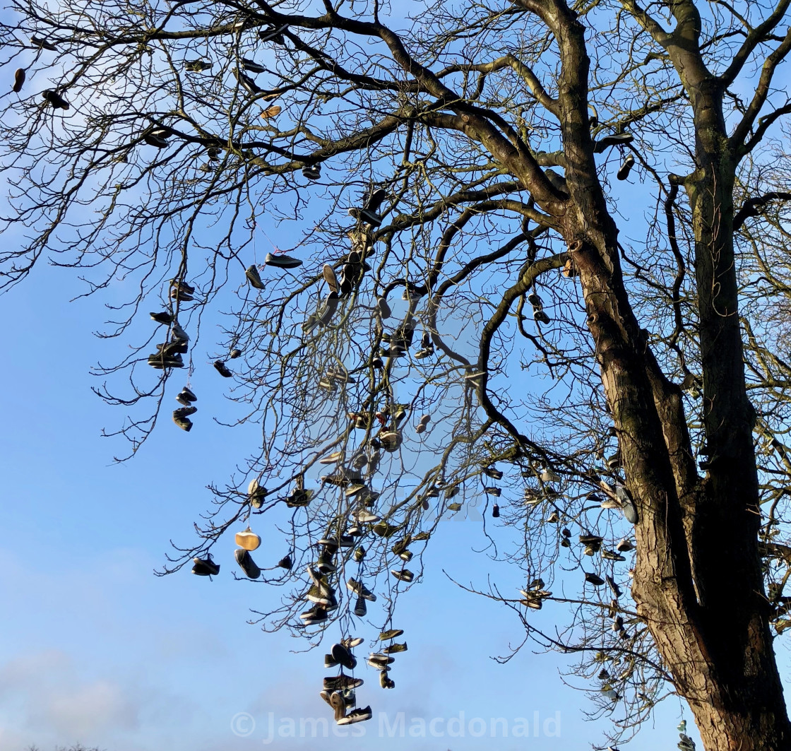 """""""Shoes hanging from a tree"""" stock image"""