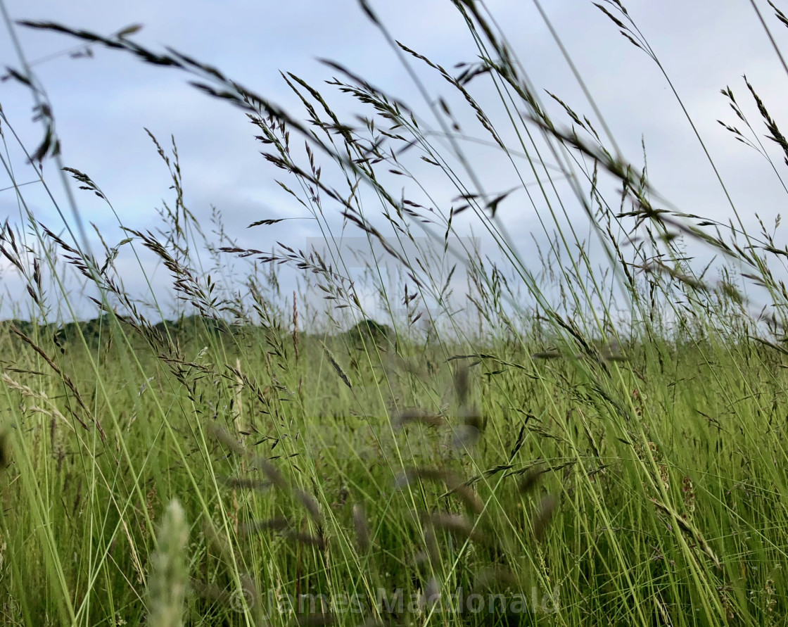 """London Meadow"" stock image"