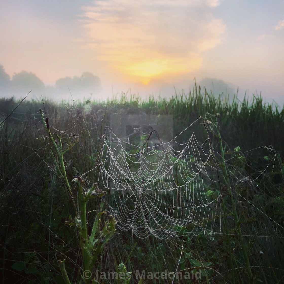 """A mist covered spiders web at sunrise"" stock image"