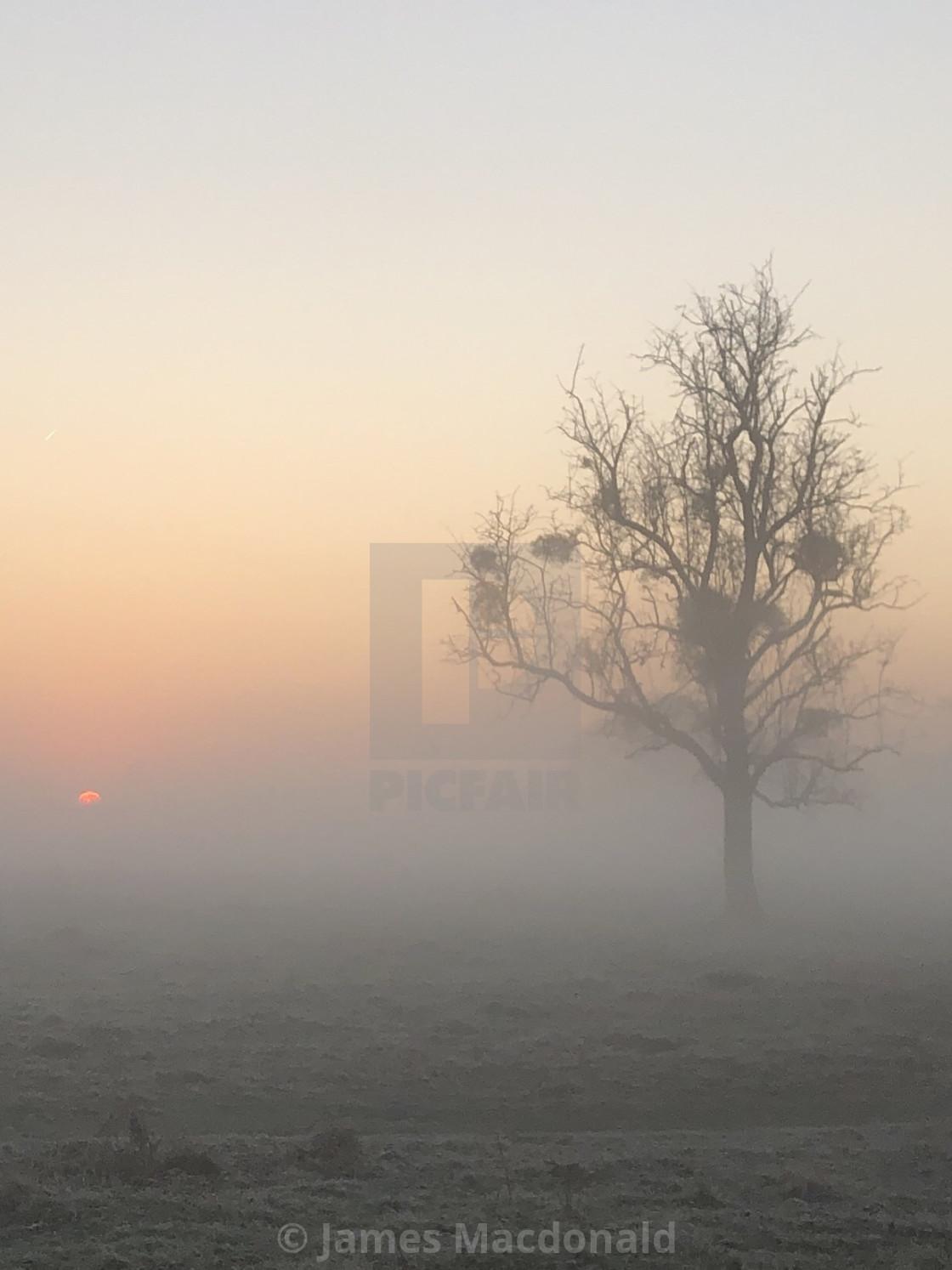 """Sunrise Bushy Park (London)"" stock image"