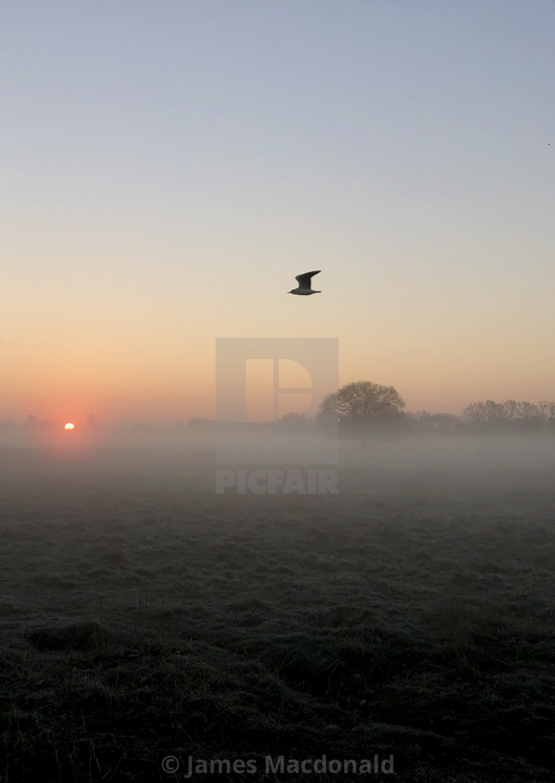 """Bushy park sunrise (London)"" stock image"