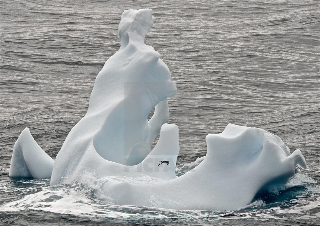 """Iceberg and bird"" stock image"