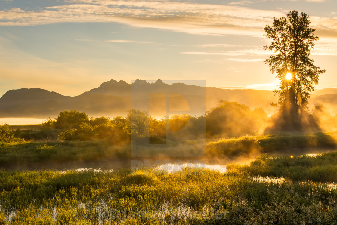 """""""Yellow Misty Landscape with Mountains"""" stock image"""