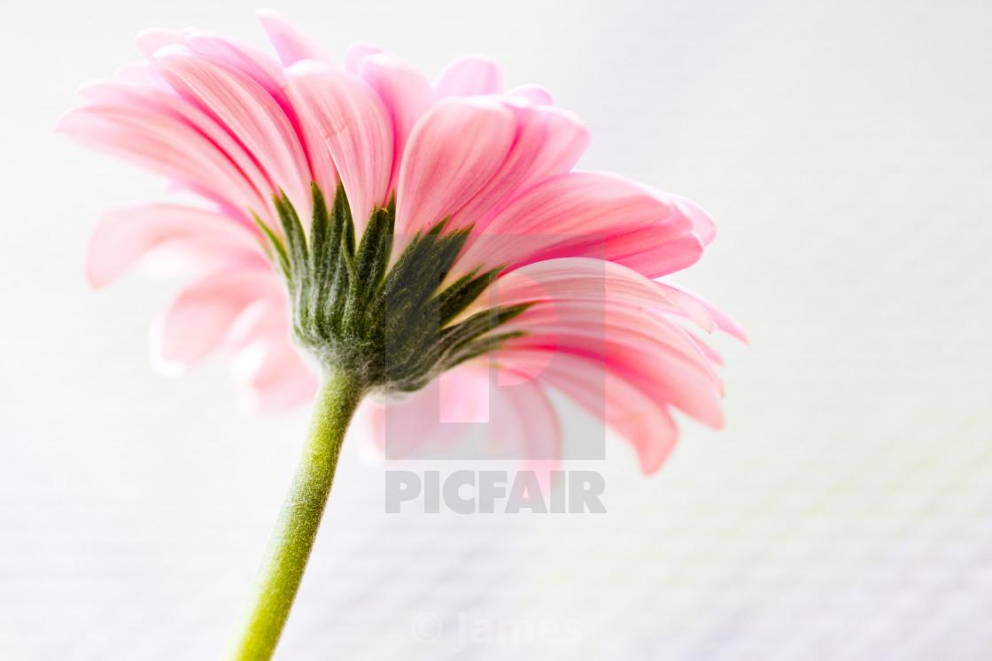 """Flower side on"" stock image"