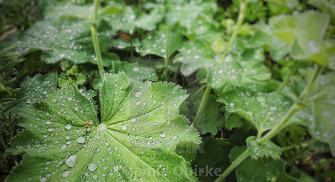 """Summer Droplets"" stock image"