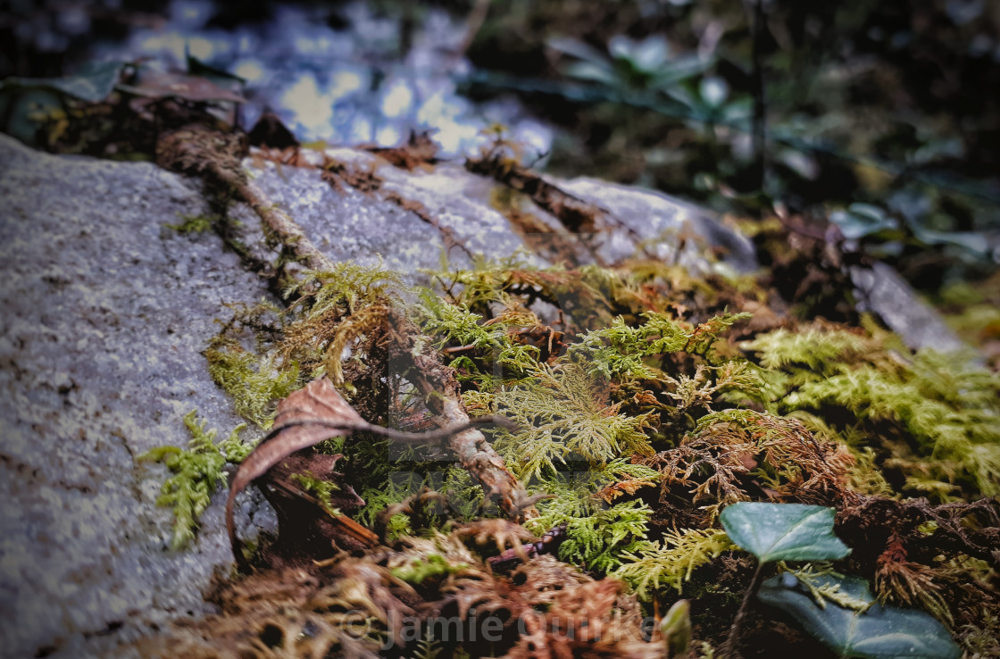"""Mossy Rock"" stock image"