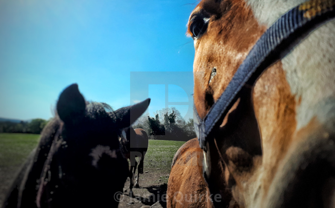 """Greetings from the Equestrians"" stock image"
