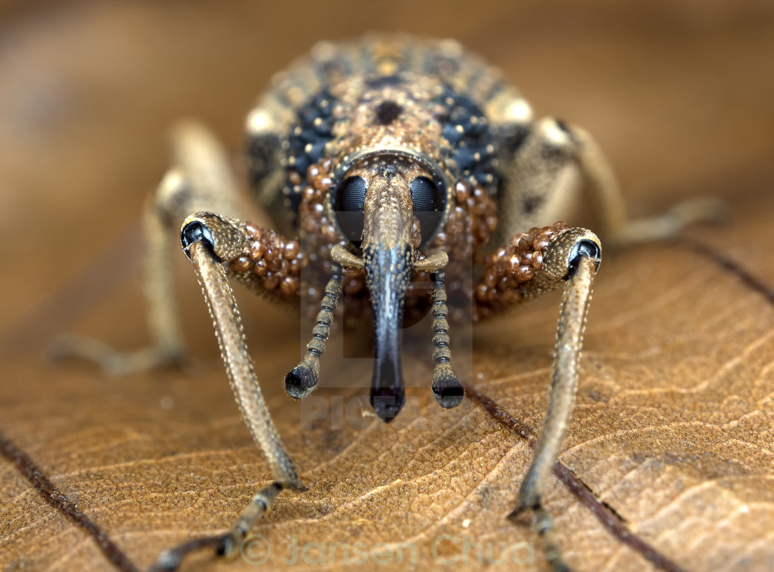 """Weevil & Mites"" stock image"