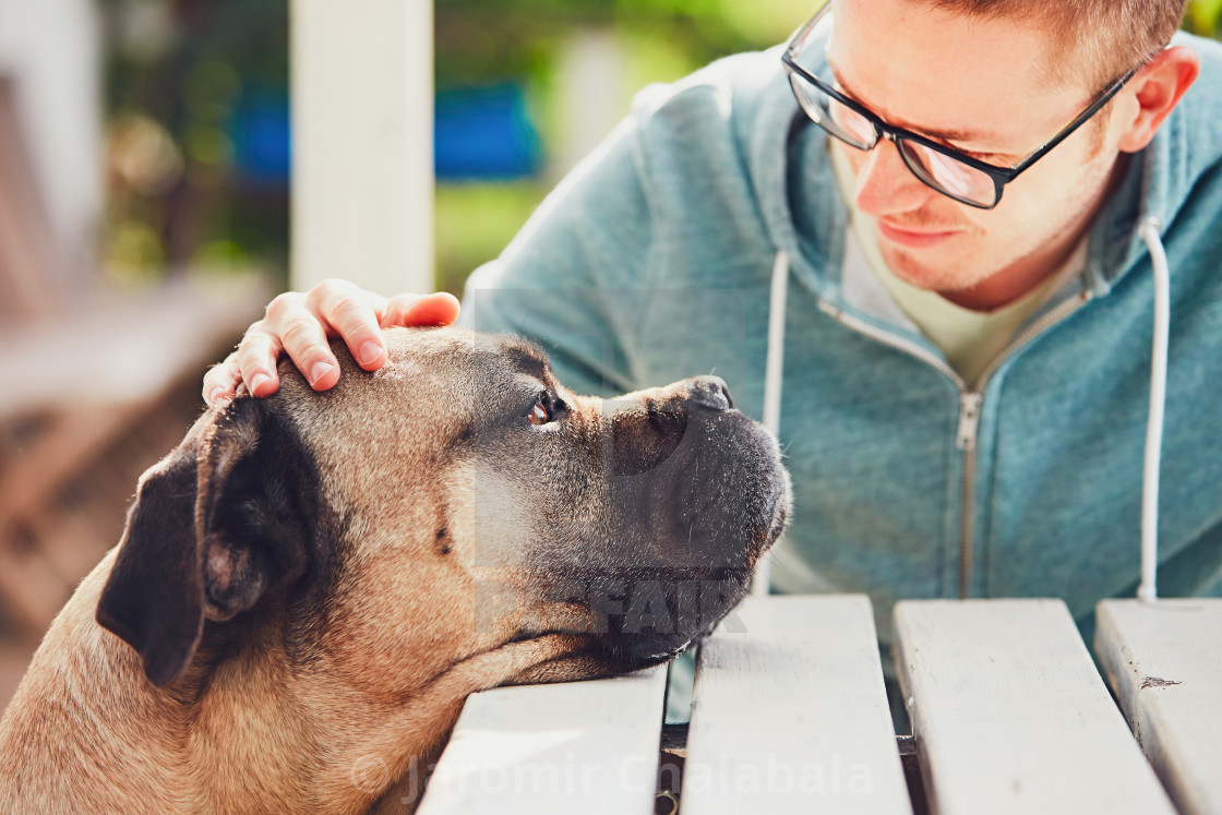 """Devoted look of the huge dog"" stock image"
