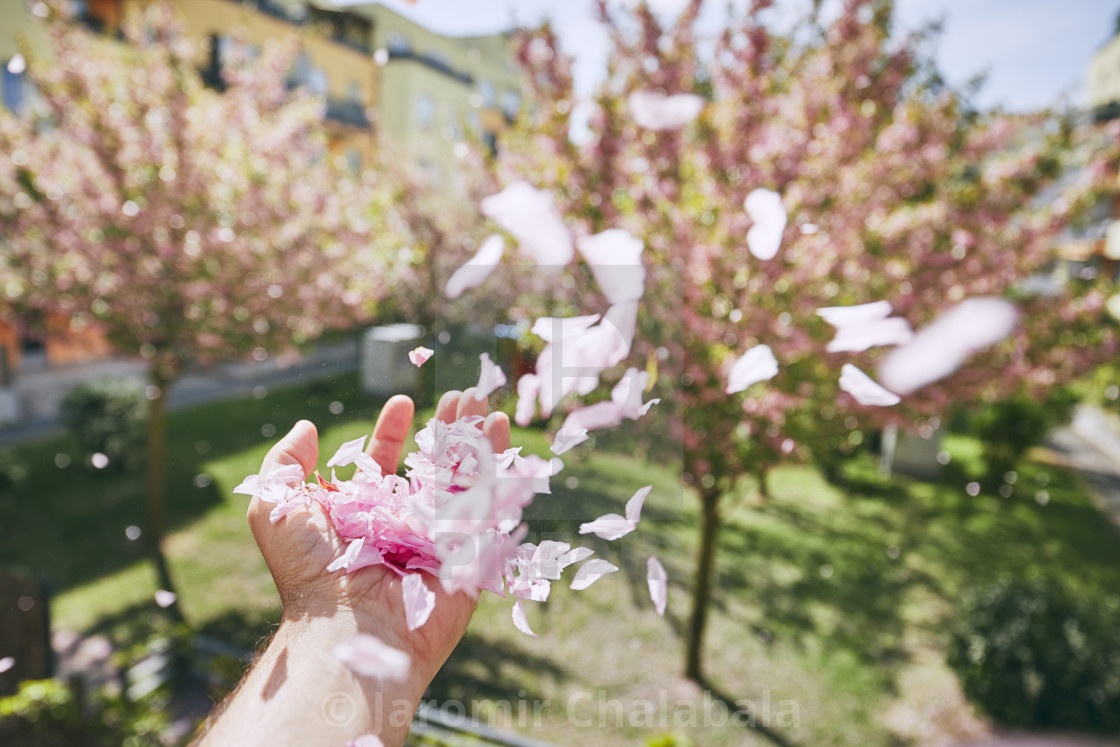 """""""Windy spring day"""" stock image"""