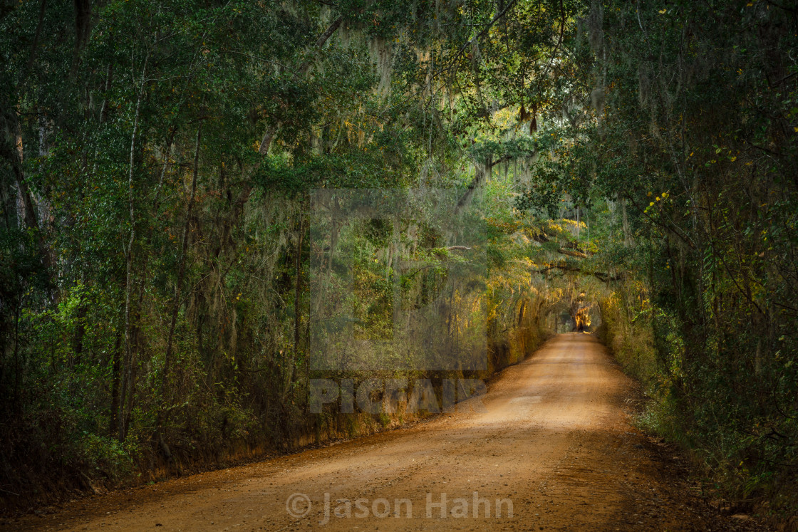 """Oak Canopy Road in Florida"" stock image"