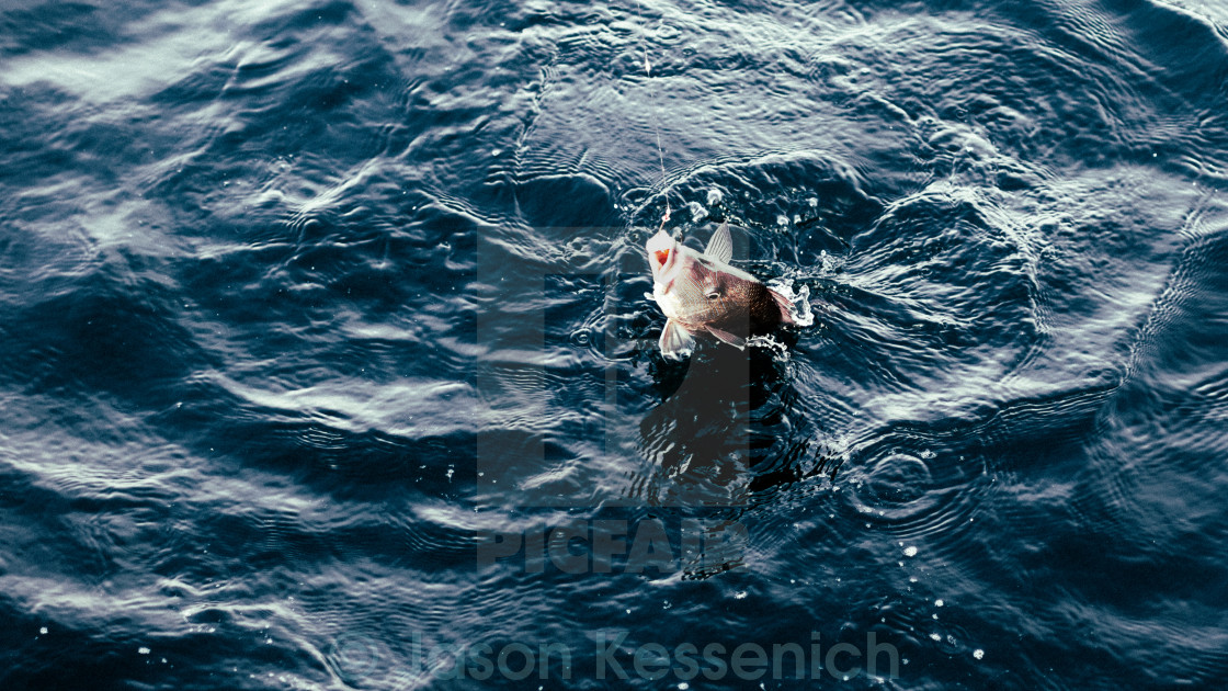 """A fish out of water"" stock image"